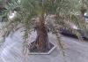 六角形樹穴蓋板